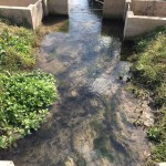 Acequia at Mission San Jose