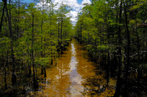 View of Big Cypress National Preserve. Photo by National Park Service.