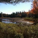 Lower West Bay Pond in Gouldsboro Credit: Ben Emory