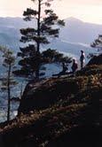Baxter Mountain n the Adirondacks. Credit: Adirondack Counci