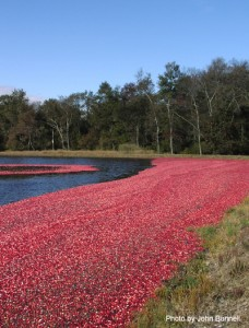 Cranberry Bog Pinelands National Reserve. Credit: John Bunnel Pinelands Commission