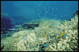 Photograph courtesy of the Great Barrier Reef Marine Park Authority