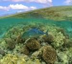 Reef Fish Photographer: James Watt