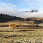 Morning in the Lamar Valley Yellowstone National Park