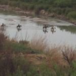 Crossing the Rio Grande  Big Bend National Park